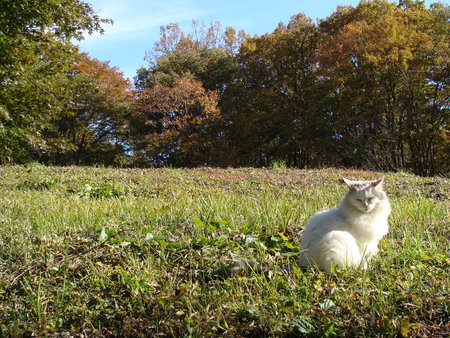 close your eyes: Grassland and cat