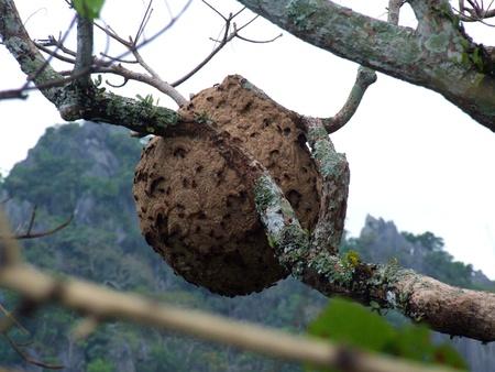 hymenoptera: Hymenoptera,Loei,Thailand