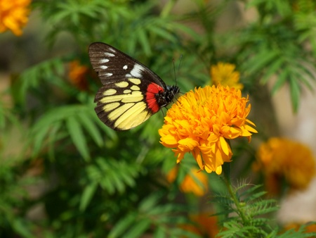buterfly,Thailand photo