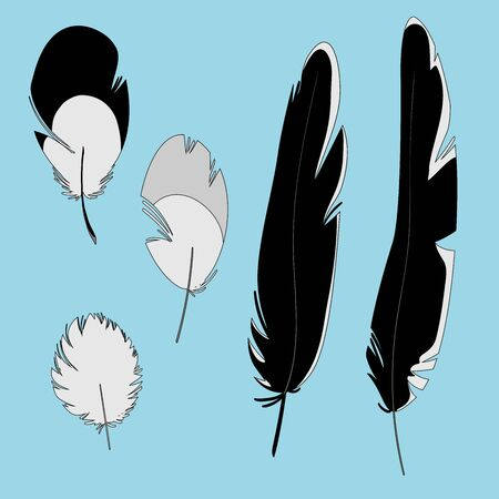 Set of crow vector feathers. Simple design suitable for animation, comics. Illustration