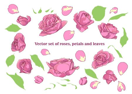 Vector set of roses, petals and leaves Illustration
