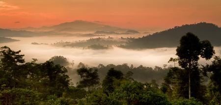 frans: Danum Valley rain forest sunrise,Borneo