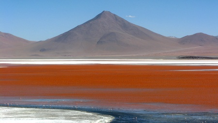 Lago Colorada,Salar de Uyuni in Bolivia photo