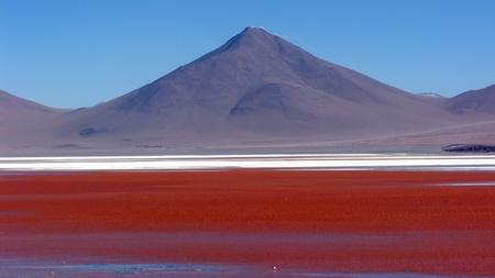 bolivia: Lago Colorada,Salar de Uyuni in Bolivia