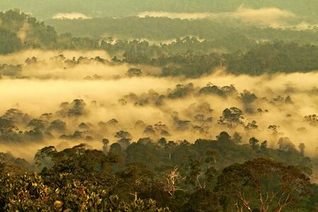 frans: Danum Valley National Park,Sabah,Borneo,Malaysia Stock Photo