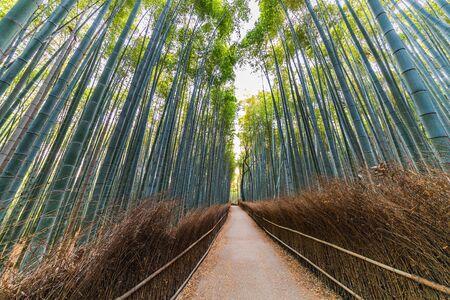 Bamboo Forest, Arashiyama, Kyoto, Japan Stock fotó