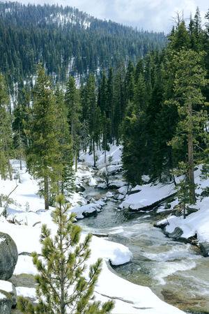 sequoia: Snowy Clover Creek in Sequoia National Park, California