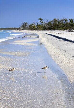 vacationers: Sandpiper birds and vacationers on a long stretch of beach on Cayo Costa State Park near Captiva Island, Florida