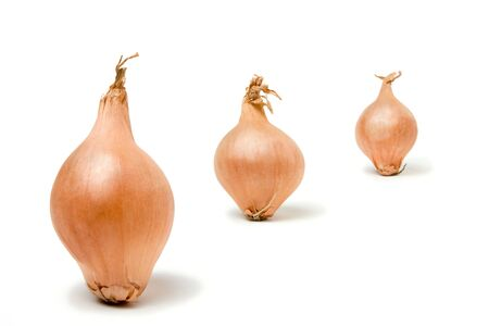 Abstract Shallot Line Up isolated against white background. photo