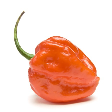 Red Hot Carribean scotch bonnet Chilli pepper from low perspective isolated against white. photo