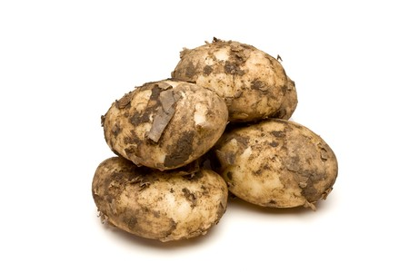 low perspective: Lincoln new Potatoes from low perspective isolated against white background.