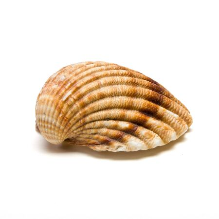 Clam shell half from low perspective isolated aganst white. Stock Photo