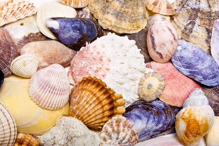 Sea Shell Background or Texture of different shapes and sizes. photo