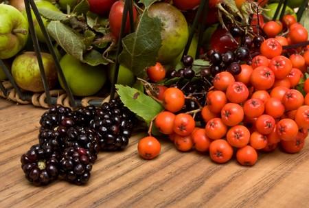 Hedgerow Fruits of Crab apple, blackberry, rose hips, elderberry and rowan berries. photo