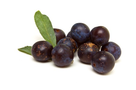 low perspective: Wild Hedgerow Sloes from low perspective isolated against white. Stock Photo