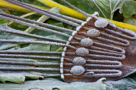 Thick frost covering on gardening tool lying on bed of frost covered leafs photo