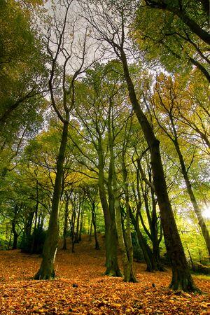 Autumn Scenic of Ryton Willows, woodland walk, Tyneside. photo