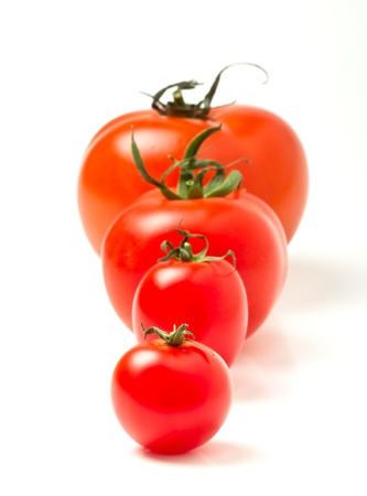 tomates: Tomato line up of four different varieties isolated on white.