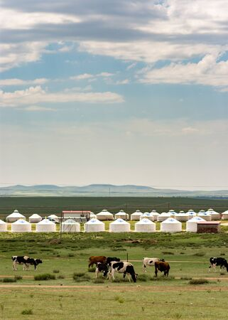 Hohhot, Inner Mongolia Province / China - July 30, 2016: Cattle grazing next to the yurt tents in Inner Mongolia Province of China, near province capital of Hohhot