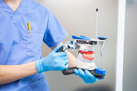 The dentist holds a dental articulator in his hands for the correct bite.