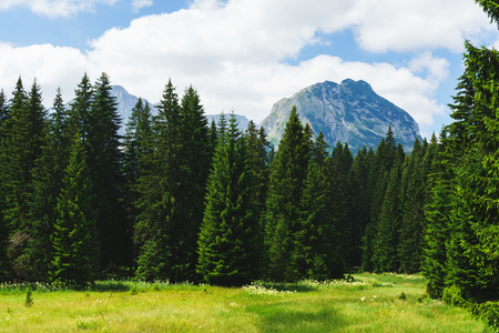 Magical views of the dense green forest and meadow in the Durmitor National Park. Journey to the Black Lake with a view of the Bobotov Kuk. Landscape and untouched nature.