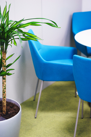 Details of the modern office. Tropical palm tree and the interior of a small working space. Turquoise chair at an empty white table organization of space in the workroom. Stock fotó