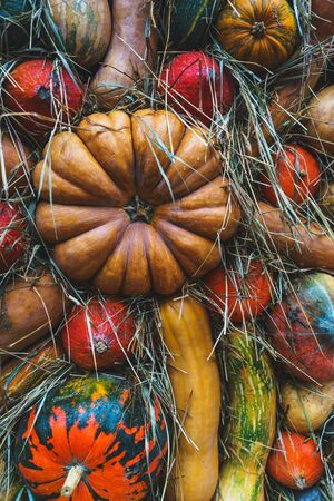 Harvest pumpkins of different size and color on the cut grass. Rustic Atmospheric autumn background. Hay and vegetables. Thanksgiving day and Halloween.
