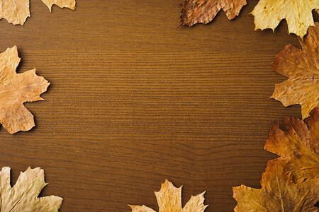 Dried dry maple leaves on wooden background. Autumn background, fall, thanksgiving day concept. Flat lay, top view with copy space. Stok Fotoğraf