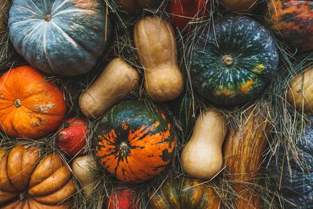 Rustic vintage background with many different pumpkins. Harvest pumpkins of different sizes, sort, varieties and colors on fresh grass. Thanksgiving Day concept