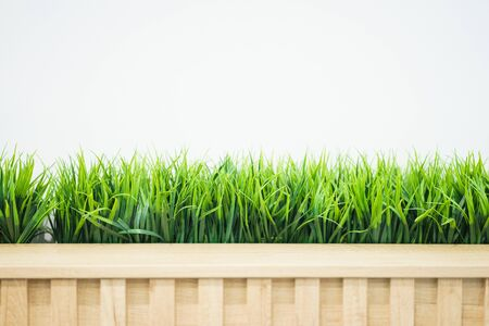 Fresh green grass in a wooden pot against a white wall in the office. Interior of the room with natural greenery. abstract background with copy space for an inscription.