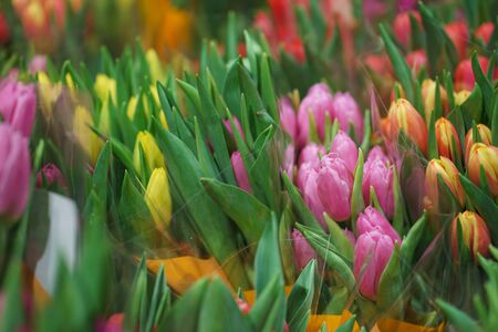 Bright fresh spring flowers tulips on the counter of a flower shop in the market. Beautiful gift for a girl or beloved woman. Soft focus and beautiful bokeh.