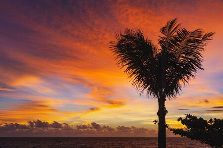 Magical dramatic sunset on a tropical beach. Tropical landscape, silhouetted with palm branches on a sunset background. Golden hour. Concept. Clouds in the sky are painted in different colors.