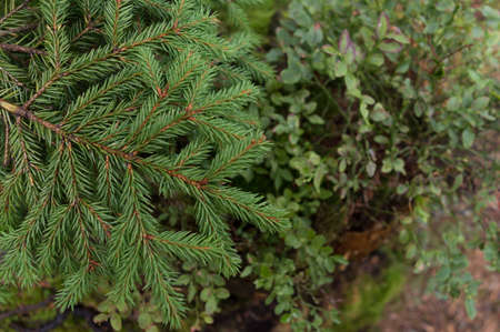 Takken aten close-up in het bos Stockfoto