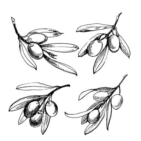 Olivenskizzenelementsammlung. Olivenzweig ist handgezeichnet. Skizze des Olivenzweigs auf weißem Hintergrund Vektorgrafik