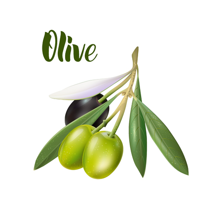 Realistic olive branch 3d illustration for advertising posters, postcards, labels  イラスト・ベクター素材
