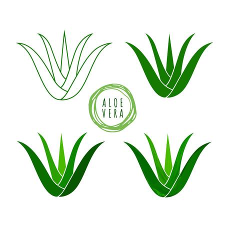 Realistic aloe vera vector illustration on white background