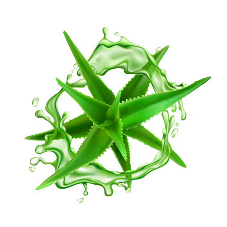 Realistic aloe vera with water splash vector illustration on white background