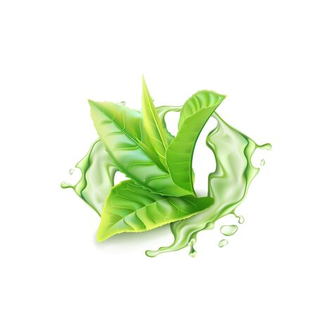 Realistic green tea branch with water splash. Vector illustration Ilustração