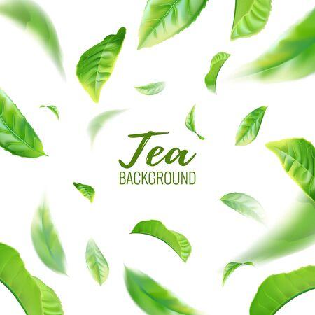 Fondo de hojas de té verde realista para cartel publicitario. Ilustración vectorial