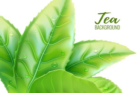 Realistic green tea leaves background. Vector illustration