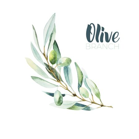 Watercolor olive branch. Sketch of olive branch on white background Çizim