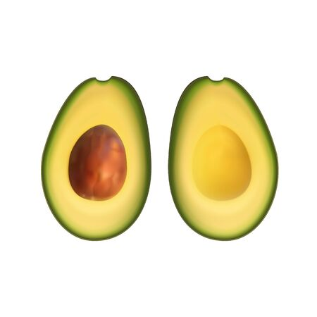 Realistic avocado. Tropical fruit. 3d illustration sectional view