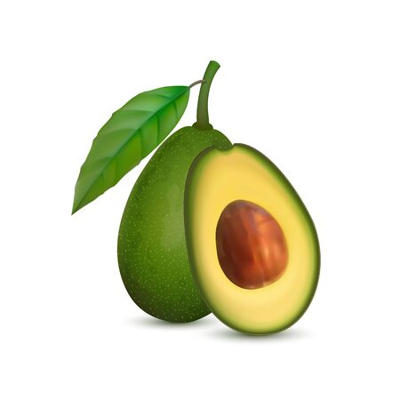 Realistic avocado. Tropical fruit. 3d illustration whole avocado and sectional view Ilustracja