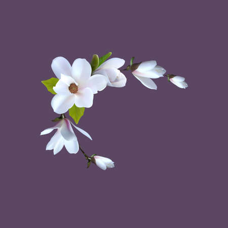 Premade arrangement magnolia flowers. Realistic magnolia for gretting card