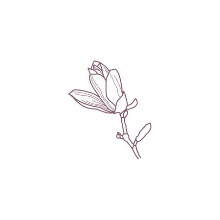Hand drawn magnolia flowers for gritting or wedding card Vectores
