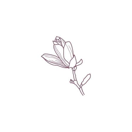 Hand drawn magnolia flowers for gritting or wedding card 矢量图像