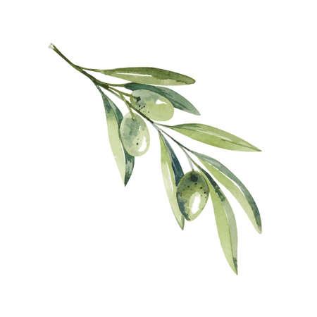 Watercolor olive branch. Sketch of olive branch on white background Illusztráció