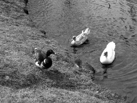 Different Breeds Stok Fotoğraf - 1327416