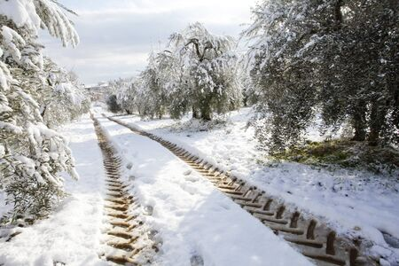 trees covered with snow and footprints tractor