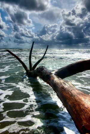 strange tree trunk stuck in the sand on seashore Stock Photo